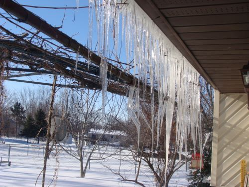 View of a snowy yard through icicles hanging down from the roof