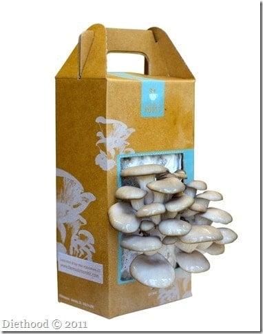 Mushroom Kit-2