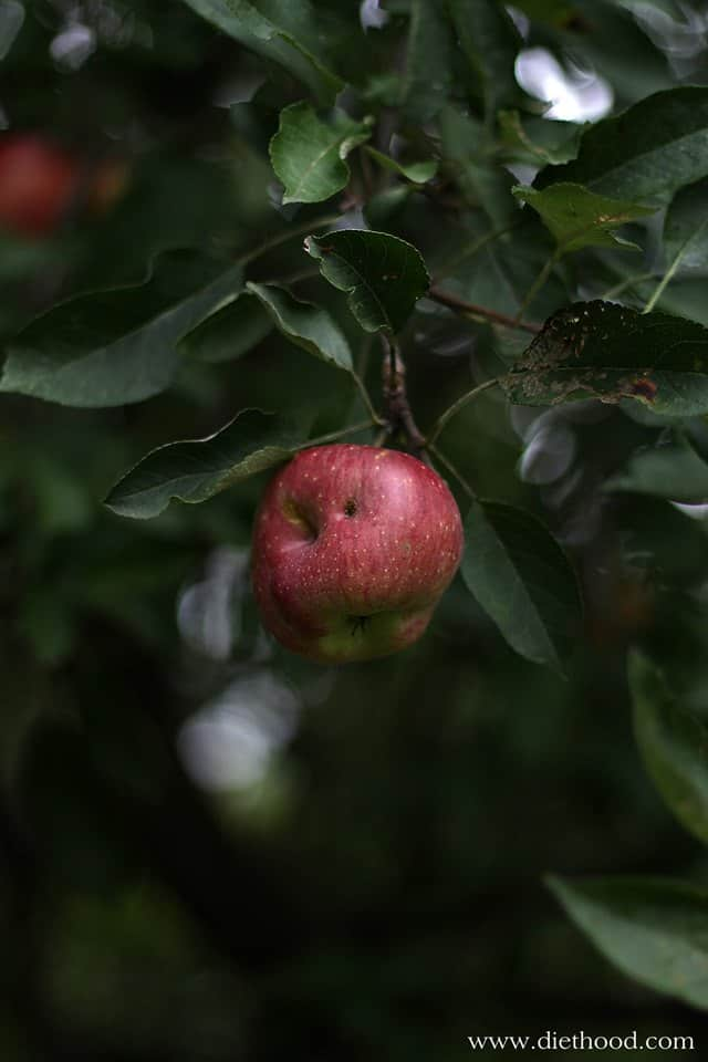 Apple Tree | via diethood.com