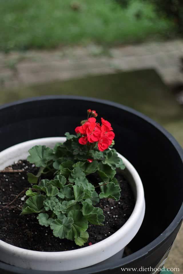 flowers | www.diethood.com